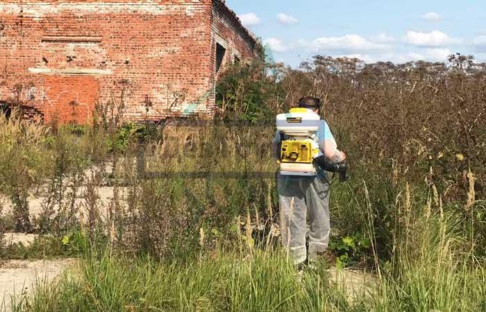 С начала мая в Подмосковье стартовали работы по уничтожению борщевика