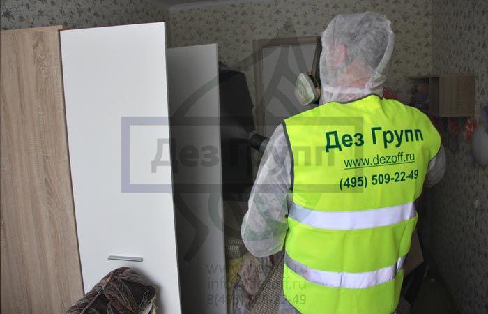 Служба по уничтожению клопов в Москве «Дез Групп»