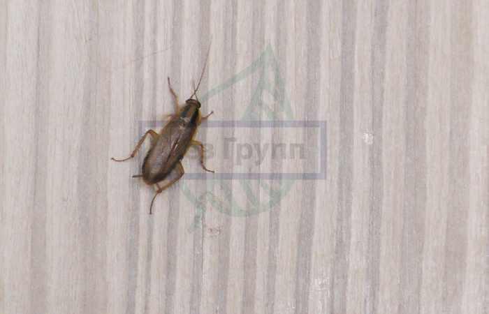 Комплексная обработка от тараканов