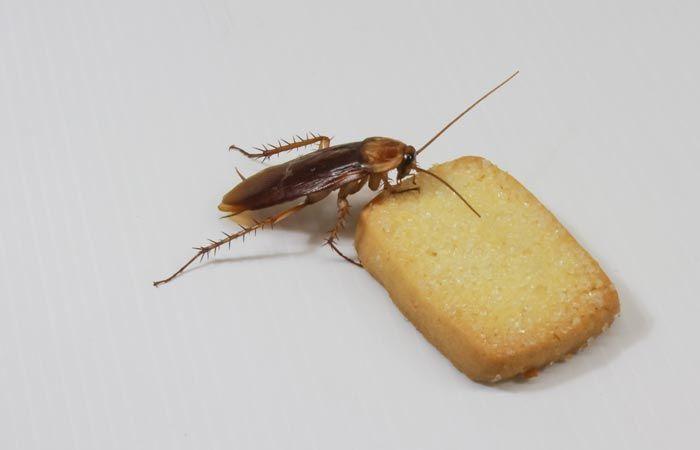 Травля тараканов в городе Химки