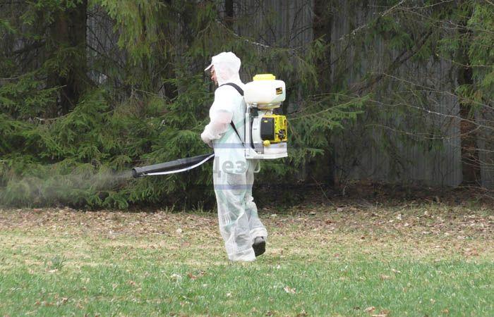 Как избавиться от кротов на садовом участке