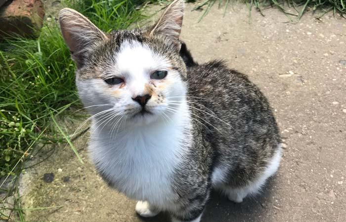Удаление клещей у кошек