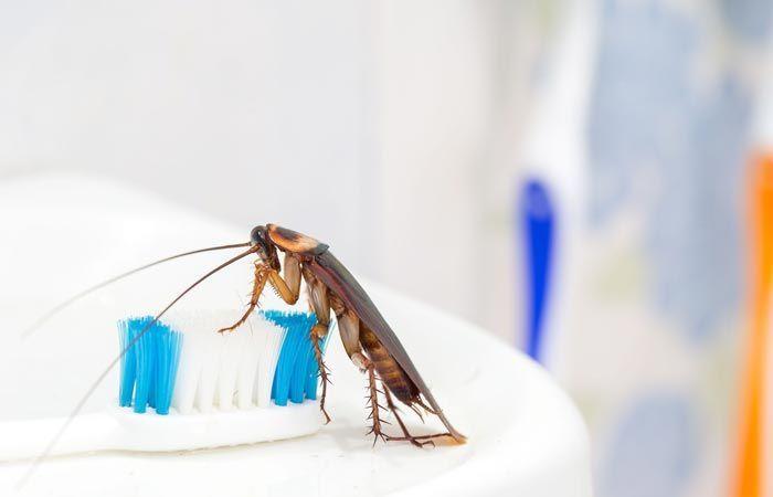 Выведение тараканов в городе Долгопрудный
