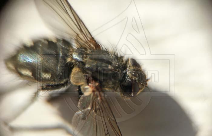 Укус мухи
