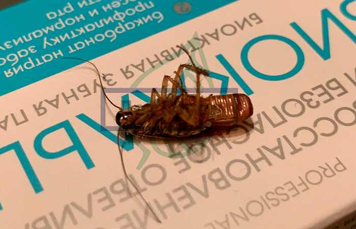 Тараканы в подвале
