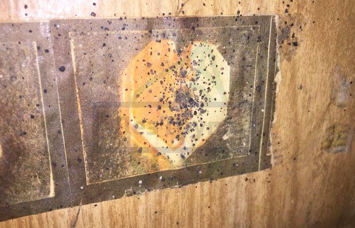 Как вывести плесневый грибок на стене в квартире - что делать