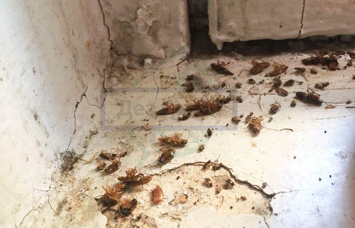Как бороться с тараканами в доме