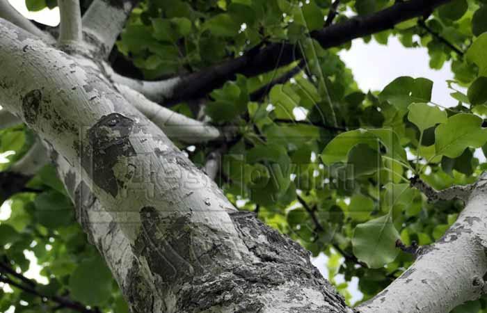 Где обитает жужелица - на деревьях