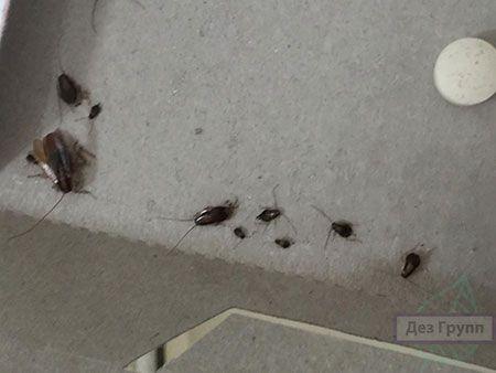 Пока не примените средства, то определить какая отрава от тараканов самая эффективная довольно сложно